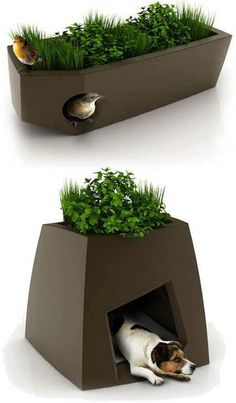 Love this idea! Bird houses & dog houses in planters. - Jillian Hoffmann - Love this idea! Bird houses & dog houses in planters. Love this idea! Bird houses & dog houses in planters. Outdoor Furniture Design, Pet Furniture, Dog Houses, Bird Houses, House Dog, Pet Home, Animal House, Growing Plants, Dog Supplies