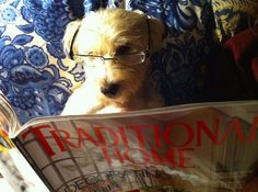That's one smart reading pooch! :) #dogsreading #canineliteracy http://www.cavendishsq.com/