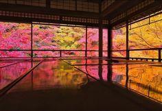 """今年も各所で紅葉が見ごろを迎えていますが、1か月だけの期間限定で見られる絶景が京都にあるのをご存知ですか?その場所は""""瑠璃光院""""。書院から眺める紅葉は息を呑む美しさで、毎年多くの人が訪れています。今年の拝観は11月1日(日)~11月30日(月)まで。今日はそんな""""瑠璃光院""""の紅葉に迫ります。"""