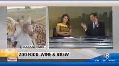 """""""O Grito do Bicho"""": Repórter é surpreendida por girafa em transmissão ..."""