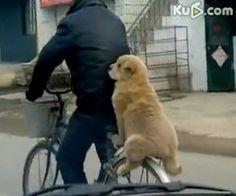 Experienced bike rider!!!  LOL