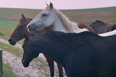 horse/horse/horse