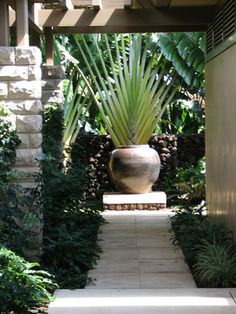 Fan palm focal point | Tropical landscape ideas
