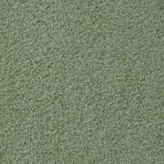 TOWNSEND, SAPPLING Texture Active Family™ Carpet - STAINMASTER®