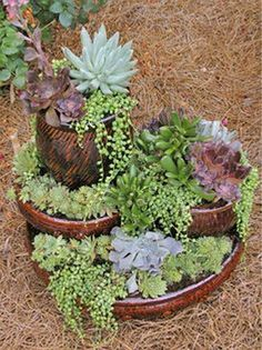 Breathtaking 123 Cool Ideas Make Enchanted Succulent Garden on Backyard https://cooarchitecture.com/2017/04/15/cool-ideas-make-enchanted-succulent-garden-on-backyard/