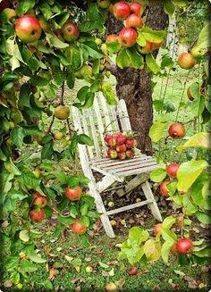 Gardening Autumn - One day my apple tree will be this laden with fruit. - With the arrival of rains and falling temperatures autumn is a perfect opportunity to make new plantations Apple Harvest, Harvest Time, Fruits Decoration, Backyard Seating, Apple Orchard, Down On The Farm, Apple Tree, Red Apple, Fruit Trees
