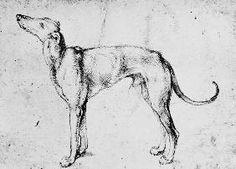 Albrecht Dürer - A.Dürer, Greyhound / Draw./ c.1500
