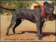 Ideas For Dogs Pitbull Puppies Bullies Pitbull Children, Dogs Pitbull, Clever Animals, Pit Dog, Black Pitbull, Dog Line, American Pitbull, Pet News, Dog Games