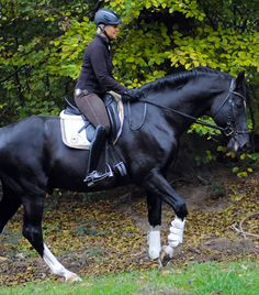 Motivate Your Dressage Horse with Uta Graf..great read