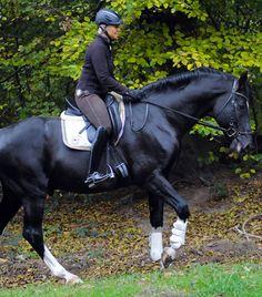 Uta Gräf erklärt, wie sie ihre Pferde motiviert