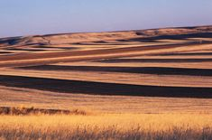 Wheat fields near Great Falls, Montana. What my front yard looks like a little Great Falls Montana, Big Sky Montana, Country Strong, Big Sky Country, Montana Landscape, Visit Montana, Home History, Montana Homes, Country Barns