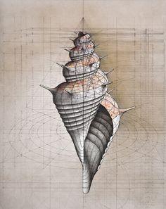 Galería de Rafael Araujo fusiona el arte y la ciencia ilustrando a mano la Proporción Áurea - 11