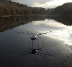 """Dragonfly - Rob Mulholland is an installation artist based in the United Kingdom. """"My main aim is to create visually stimulating and thought provoking sculpture installations."""" - Rob Mulholland."""