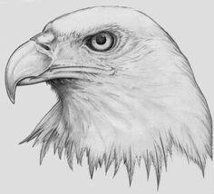Realistic Eagle Head Tattoo Design Nice realistic drawing of the eagle's head. Bald Eagle Tattoos, Eagle Head Tattoo, Head Tattoos, Wing Tattoos, Sleeve Tattoos, Bird Drawings, Realistic Drawings, Animal Drawings, Drawings Of Eagles