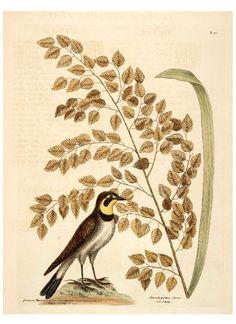 Animals & Birds Printables   Vintage Printable