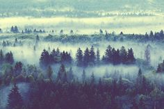 Foggy Forrest.