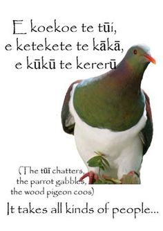 The tui chatters, the parrot gabbles, the wood pigeon coos. It takes all kinds of people. Teaching Social Skills, Teaching Resources, Cool Words, Wise Words, Maori Symbols, Teaching Philosophy, Maori Designs, Maori Art, Too Cool For School