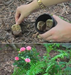 7. Tannic acid in tea bags can lower the pH in soil and help your plants grow free of fungus.