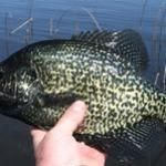 Fishing Is Not That Difficult When You Have Good Tips To Follow and learn more about crappie ideas here http://www.crappiefishingrigs.com/crappie-pro-jig-heads/
