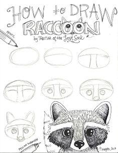 The Lost Sock : Fall Raccoon Raccoon Drawing, Raccoon Art, Racoon, Drawing Lessons, Drawing Techniques, Art Lessons, Animal Line Drawings, Dibujos Cute, Jolie Photo