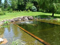 Building A Natural Swimming Pond