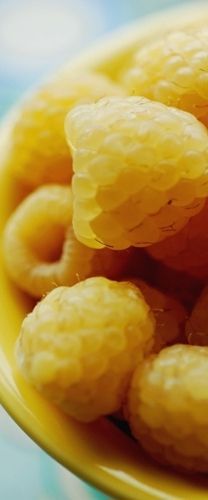 Yellow raspberries -- these have a hint of apricot flavor