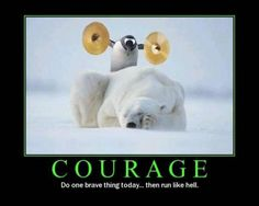 There is courage then there is stupidity.