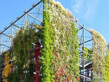 Researchers at the Yale School of Forestry & Environmental Studies are out to create and research green walls, with a $299,000 grant from the National Science Foundation received in late July. (http://livingarchitecturemonitor.com/index.php/news/allnews/443-yale-researchers-to-develop-and-research-green-walls) | #greenwall #ecowall #livingwall #greenwalls #ecowalls #livingwalls #green #living #eco #yale #yaleuniversity #research