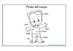 Conocimiento del medio: Fichas del cuerpo humano Teaching Spanish, Snoopy, Comics, Fictional Characters, Wood Trunk, Arms, Index Cards, Classroom, Consciousness