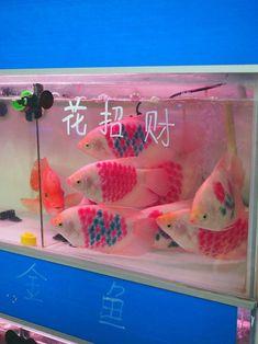 i think they tattooed the fish.....