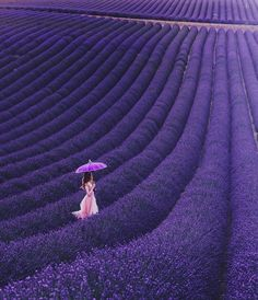 """5,768 tykkäystä, 40 kommenttia - Kristina Makeeva↟Kotleta↟Timon (@hobopeeba) Instagramissa: """"Lavanda, Valensole, Provence 🇫🇷// model: @chashashuli // Наверное, срочные дела когда-нибудь…"""""""