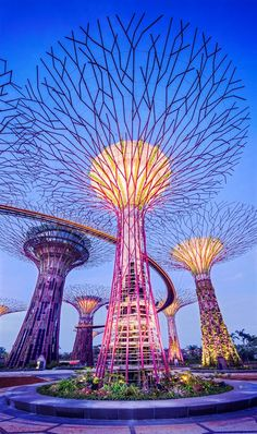 Supertrees, Singapore - Supertrees are tree-like structures that dominate the Garden of the Bays' landscape. They are home to enclaves of unique and exotic ferns, vines, orchids and also a vast collection of bromeliads. They are fitted with environmental technologies that mimic the ecological function of trees.