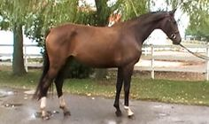 See what Karen McGoldrick said about this horse!