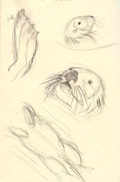 sea otter sketches by ~thylobscene on deviantART
