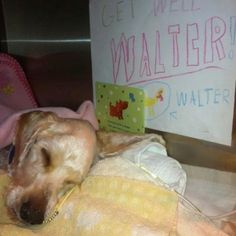 Walter: update Very little change, he has been sleeping a lot.  Such a sweet boy. My heart goes out to him. Follow his story on Facebook.  Snooty Giggles animal rescue.