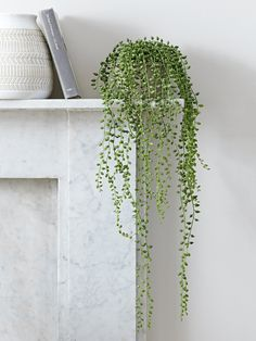 NEW Faux Potted String of Pearls - Faux Flowers & Plants - Decorative Home Accessories - Luxury Homeware home accessories Artificial Flowers And Plants, Artificial Flower Arrangements, Home Decor Accessories, Decorative Accessories, Decoration Plante, Home Decoration, Botanical Decor, Ideas Hogar, String Garden