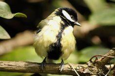 Photo by GregDaddyMac My Photos, Bird, Animals, Animales, Animaux, Animais, Birds, Animal