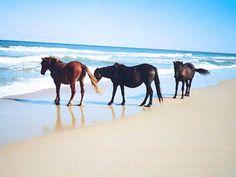 Emerald Isle, NC - Shackleford Wild Horses