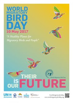 The Story Behind Our World Migratory Bird Day 2017 Poster Online Volunteering, Migratory Birds, Material World, Used Parts, Our World, Native American Art, Art Forms, Color Patterns, Day