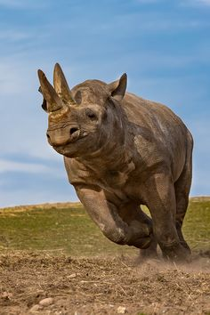 Rhino by Morten Thomsen on Nature Animals, Animals And Pets, Baby Animals, Funny Animals, Cute Animals, Baby Hippo, Wild Animals, African Animals, African Elephant