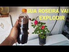 Sua roseira vai explodir quando vocês usar isso!!! - YouTube Green Garden, Garden Plants, Hibiscus Plant, Green Life, Body Painting, Drink Bottles, Bonsai, Gardening Tips, Diy And Crafts