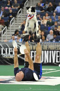 Halftime Dog Tricks
