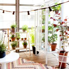 Dyrk din have på altanen Balcony Garden, Bring It On, Cabin, Outdoor Decor, Plants, Wolf, Gardens, Outdoors, Home Decor