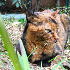 Good sunday ❤❤#mygreatcat #my_loving_pet #cat #gatto #catoftheday #catsofinstagram #catstagram #gatti #instacat #instacat_meows #bestmeow #topcatphoto #miao #catlover #gatto #catoftheday #katze #gato #chat #猫  #neko #猫好き #Exellent_Cats #子猫 #プッシーキャット #ニャー #甘い #愛猫