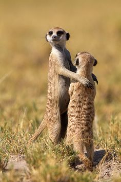 Dance little sister by Wild Dogger, via Flickr