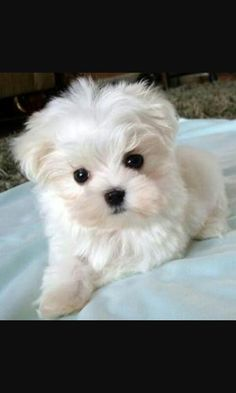 Precious puppy.