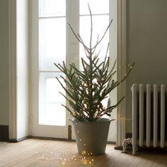 tabletop fraser fir from shop terrain