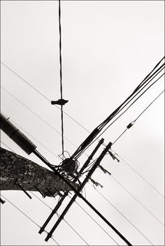 Los Angeles, USA - a crow sits on powerlines overhead (by Ivan Lo)