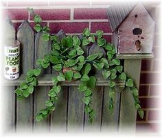 DIY TRAILING PLANT - leaves made with heart punches...see website for the potting bench.