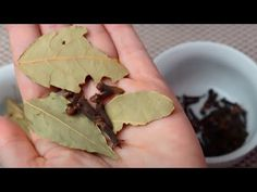Bay Leaf & Clove Tea Recipe To Fight Joint Pain and Inflammation - YouTube Bay Leaves, Plant Leaves, Natural Cures, Natural Health, Clove Tea, Body Inflammation, Bone And Joint, Medical Problems, How To Make Tea
